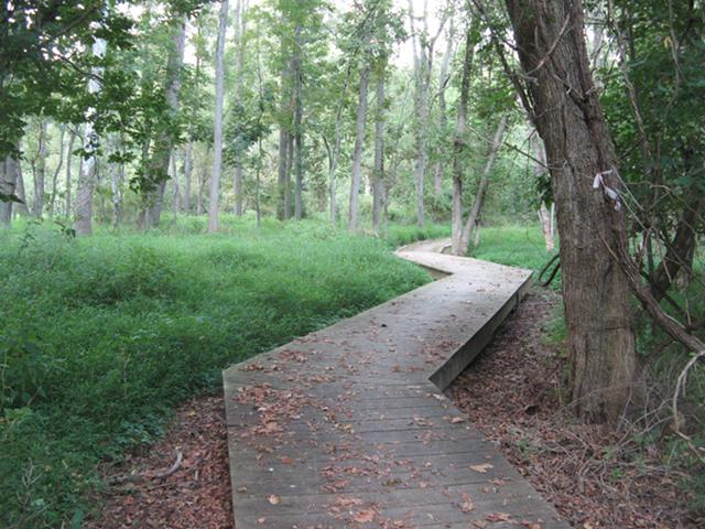 zigzag-path-white-clay-creek-state-park